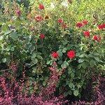 ภาพถ่ายของ Yokohama English Garden