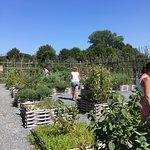 Exemple d'un aménagement de jardin, déambulation facile et agréable