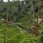 Photo of Tegalalang Rice Terrace