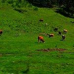Φωτογραφία: Altai Mountains