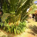 Photo of Escale Creole