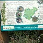 Ufton Fields Nature Reserve Foto