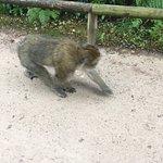 Monkey walking on the path beside us