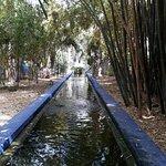 Stream at Jardin Marjorelle