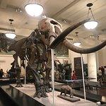 ภาพถ่ายของ American Museum of Natural History