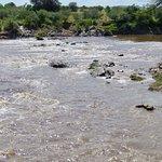Mara River Foto