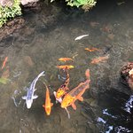 Valokuva: Madeira Botanical Garden