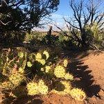 Prickly Pear at dusk