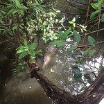 Debajo del puente que pasa por un costado del estanque de los cocodrilos