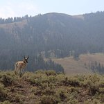 Yellowstone Insight - Day Toursの写真