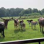 Dutch Creek Farm Animal Park Image