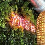 صورة فوتوغرافية لـ Yuca