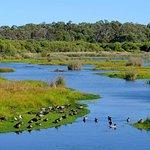 Foto de Yanchep National Park