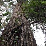 Photo of Munduk Wilderness - Day Tours