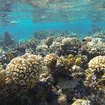 Maupiti Lagon - Jardin de corail