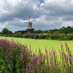 Windmill view!