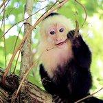 Фотография Остров Джунглей