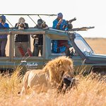 Lion with Wildebeest kill with our photo tour guest and guide capturing the action in the Maasai