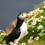 Photo of Shetland Wildlife