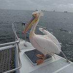 Pelican on board!