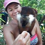 lemure femmina