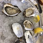 Oysters from the Tomales Bay