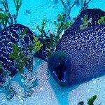 Foto de Mike Severns Diving