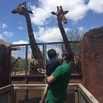 Foto van Gladys Porter Zoo