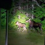 Pemi Valley Moose Tours Photo