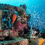 Photo de Bali Dive Trek