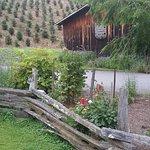 Boyd Mountain Log Cabins afbeelding