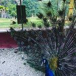 Foto de Taman Rekreasi Gunung Lang