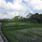 Erg leuke fietstocht, heerlijk tussen de rijstvelden en aan het eind een stukje wandelen door de