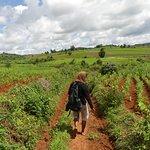 trekking to Pindaya for 3 days !