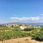 Foto Popić Winery