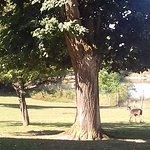 Bilde fra Parc Naturel de Chambaran