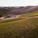 Aerial winery shot.