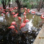 The flamingo greeters