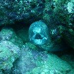 Mares Dive Center Bild