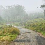 Valokuva: Rajamalai (Eravikulam) National Park