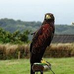 Another bird of prey