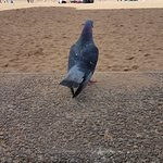 Foto Portobello Beach