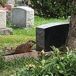 Foto van Mont (Mount) Royal Cemetery