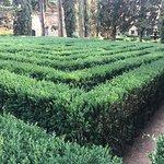FUN box hedge maze