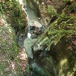Cascade d'Angon照片