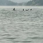 Foto de Ocean EcoVentures Whale Watching