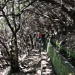 Flora Travel Madeira - Day Tours & Walks照片