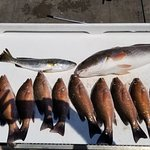 ภาพถ่ายของ Fin-sanity Fishing Charters LLC