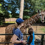 the baby giraffe enjoyed being petted