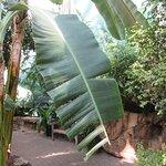Billede af Quad City Botanical Center